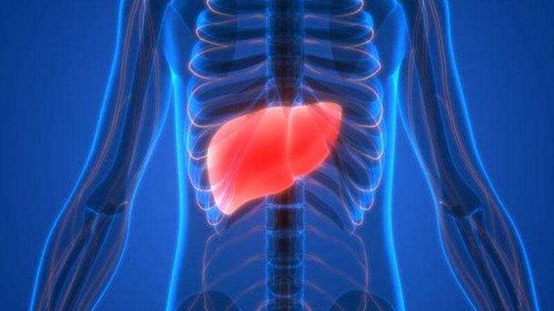 Karaciğer naklini ortadan kaldırabilecek bir hücre keşfedildi