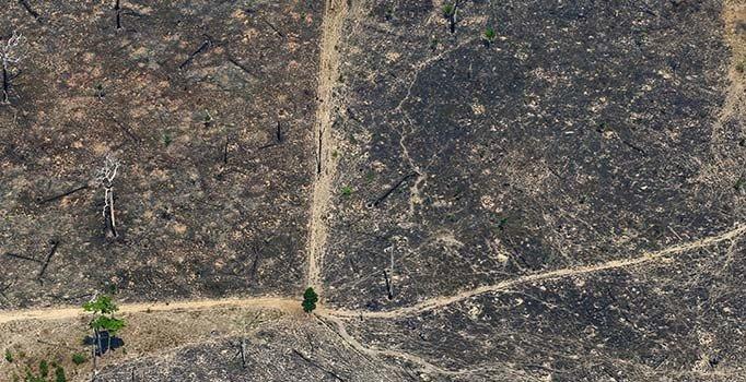 Brezilya'da kabus büyüyor! Son 10 günde 15 bin 469 yangın çıktı