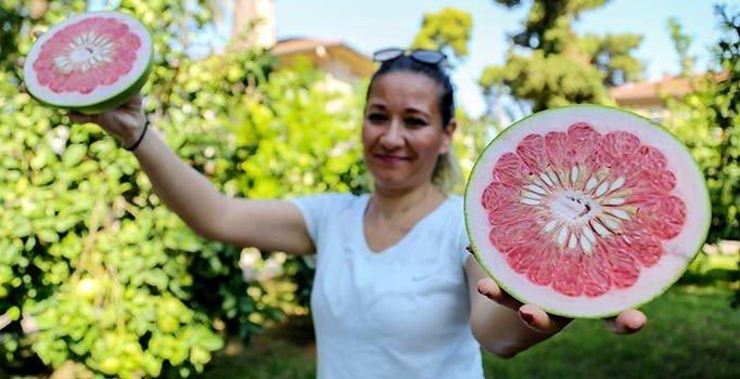 C vitamini deposu 'pomelo'